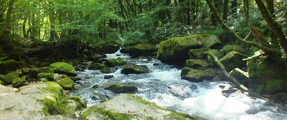 Golitha Falls with its lovely woodland walks is nearby
